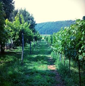 Valli di Fimon - Colli Berici Wine from our Backyard!