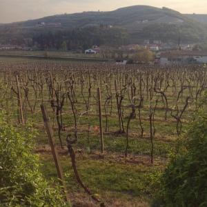hills and vineyards surrounding the local area of Mezzano di Sotto, Verona