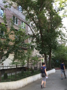our tranquil central Tashkent neighborhood
